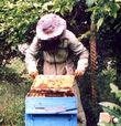 Куда податься пасечнику-пчеловоду?